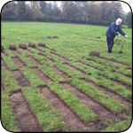 Chris cutting the long strips of turf into shorter lengths